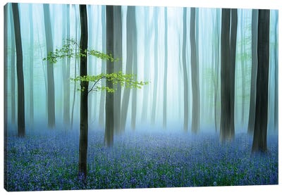 The Blue Forest Canvas Art Print