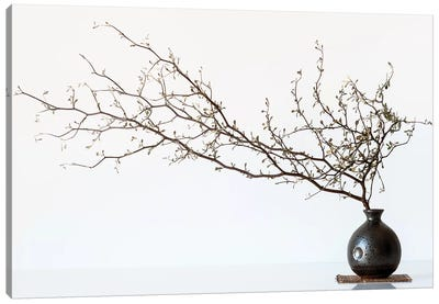 Vase And Branch Canvas Art Print