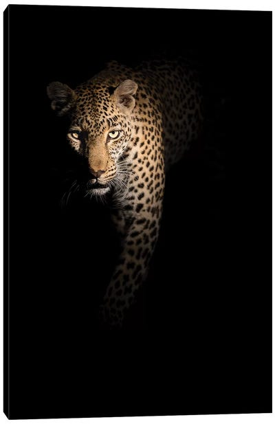 Out Of The Darkness Canvas Art Print