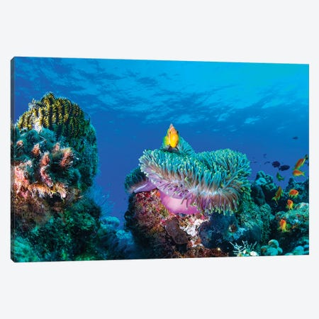 Sea Life Canvas Print #OXM4774} by Roberto Marchegiani Canvas Art Print