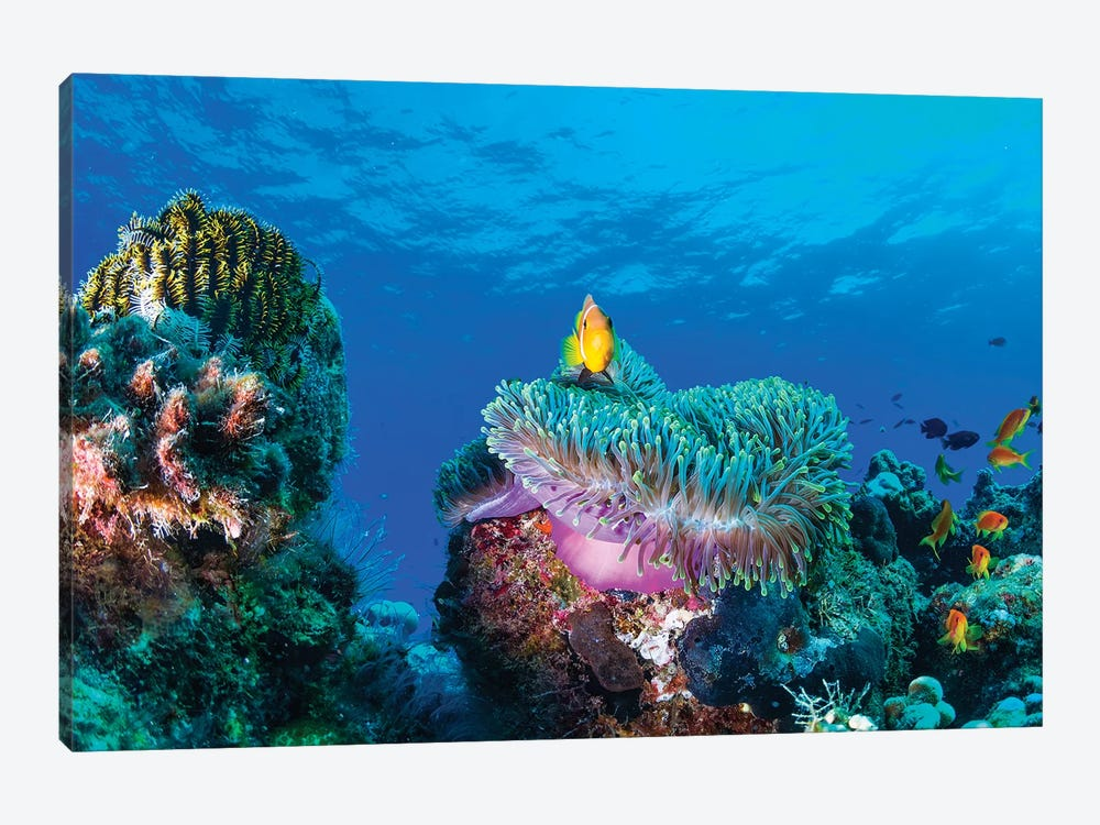 Sea Life by Roberto Marchegiani 1-piece Canvas Art Print
