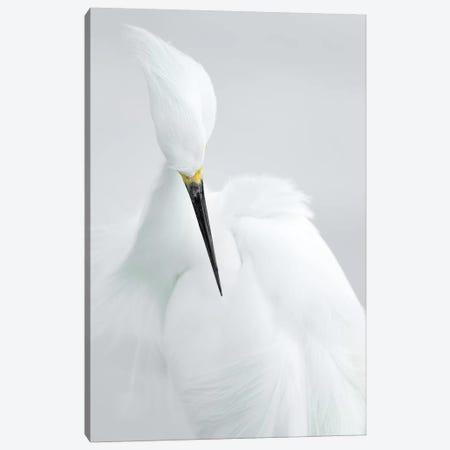 White Beauty Canvas Print #OXM4782} by Rostislav Kralik Canvas Print