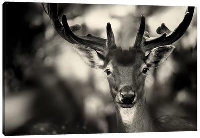 Bambi Canvas Art Print