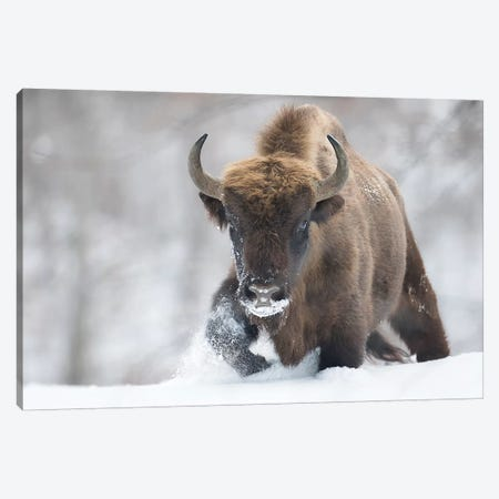 Rewilded Canvas Print #OXM4799} by Sebastian Mastahac Canvas Art
