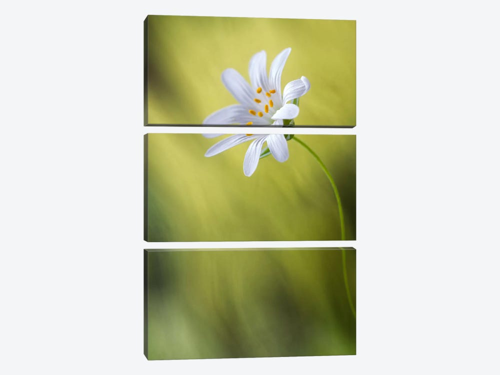 Stitchwort by Mandy Disher 3-piece Canvas Artwork
