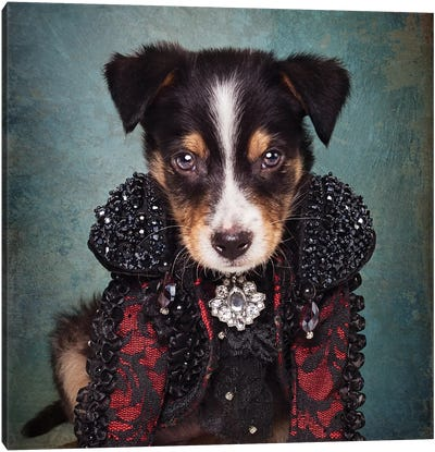 Shelter Pets Project - Loki Canvas Art Print