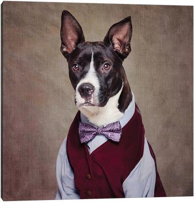 Shelter Pets Project - Petey Canvas Art Print