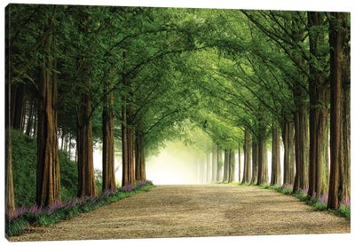 Metasequoia Road Canvas Art Print