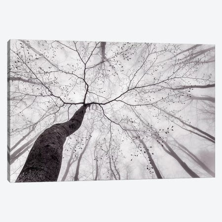 A View Of The Tree Crown Canvas Print #OXM4828} by Tom Pavlasek Canvas Art