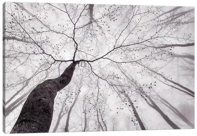 A View Of The Tree Crown Canvas Art Print