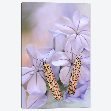Pretty Pair Canvas Print #OXM482} by Jimmy Hoffman Canvas Wall Art