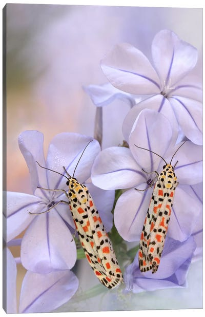 Pretty Pair Canvas Art Print