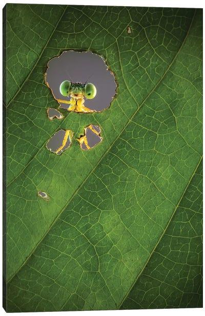Nature Frame Canvas Art Print