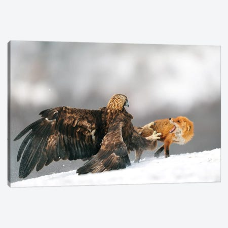 Golden Eagle And Red Fox Canvas Print #OXM4852} by Yves Adams Art Print