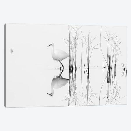 White 3-Piece Canvas #OXM4856} by Zhecho Planinski Canvas Artwork