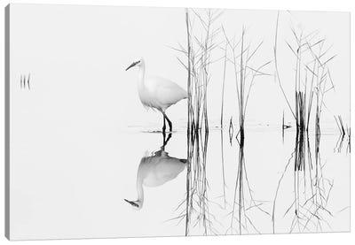 White Canvas Art Print