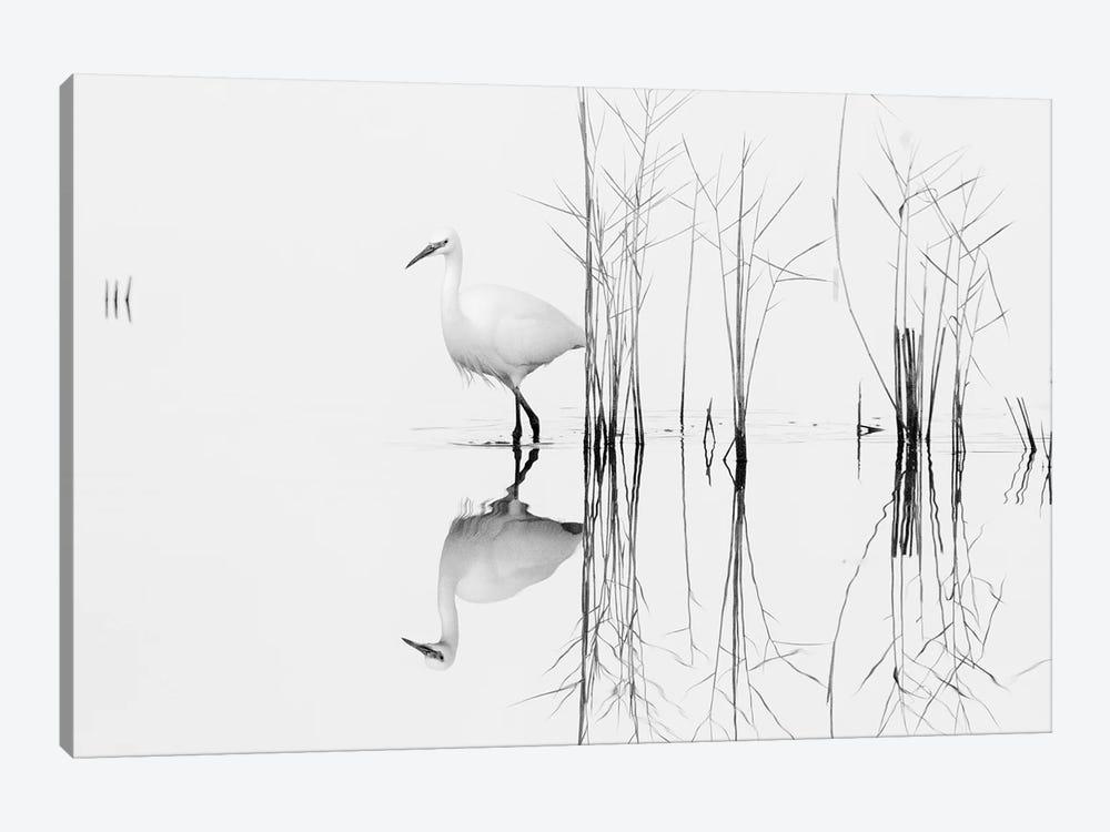 White by Zhecho Planinski 1-piece Canvas Print
