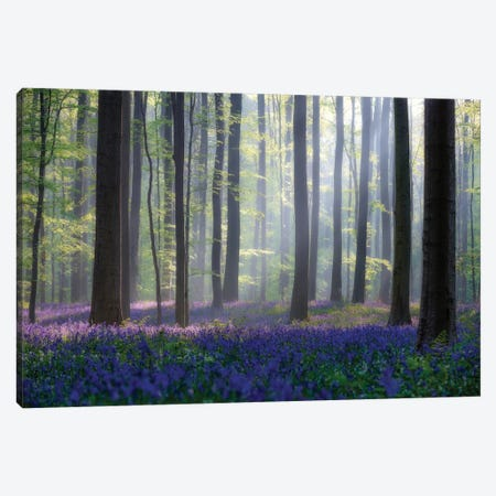Bluebells Canvas Print #OXM485} by Adrian Popan Canvas Print