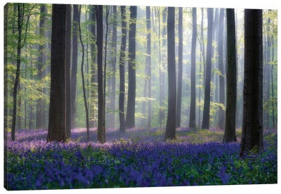 Bluebells Canvas Art Print