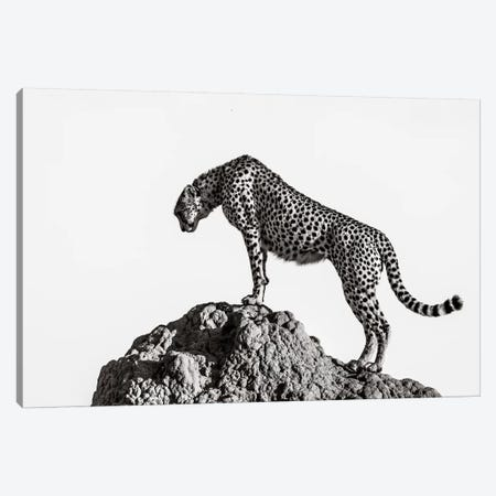 The Hunter Canvas Print #OXM4866} by Ali Canvas Print