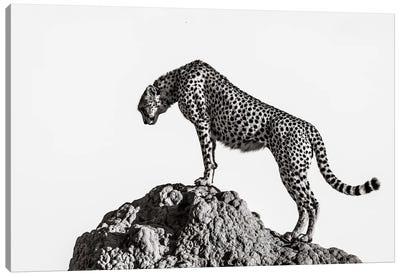 The Hunter Canvas Art Print