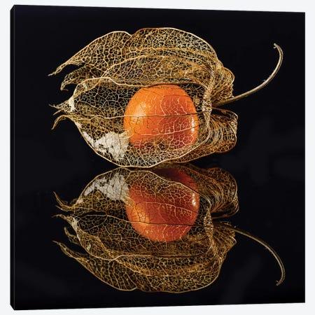 Physalis Canvas Print #OXM4919} by Klaus Grosshanten Canvas Artwork