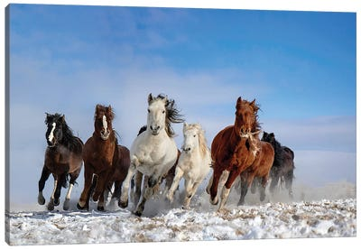 Mongolia Horses Canvas Art Print