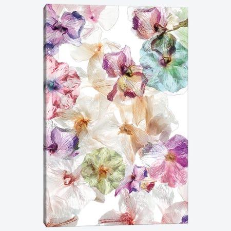 Ghost Orchids Canvas Print #OXM4928} by Ludmila Shumilova Art Print