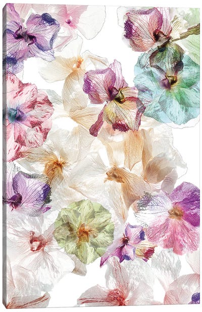 Ghost Orchids Canvas Art Print