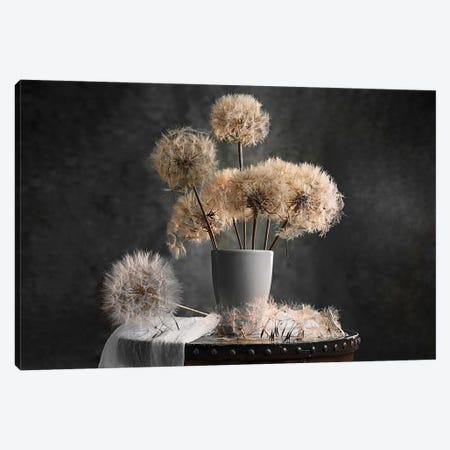 Dandelion Seed Pod Canvas Print #OXM4931} by Lydia Jacobs Canvas Artwork