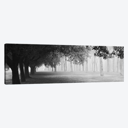 Morning Fog Canvas Print #OXM4938} by Matteo Chiarello Canvas Art