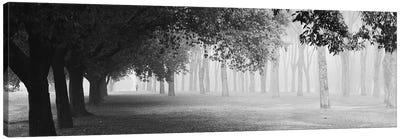 Morning Fog Canvas Art Print