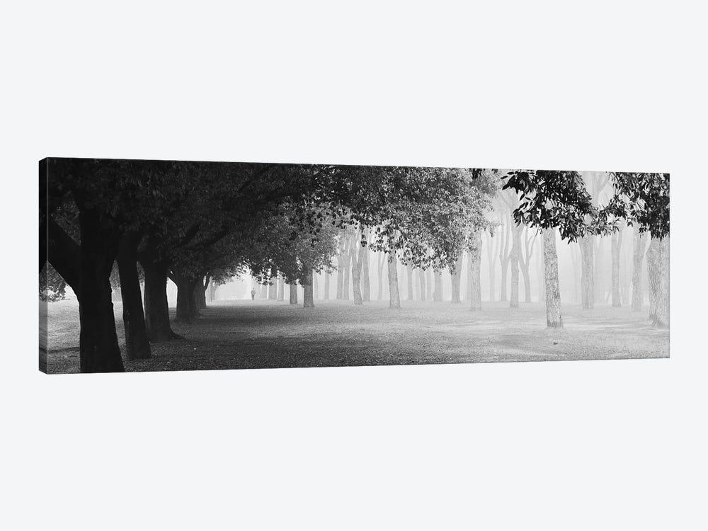 Morning Fog by Matteo Chiarello 1-piece Canvas Artwork