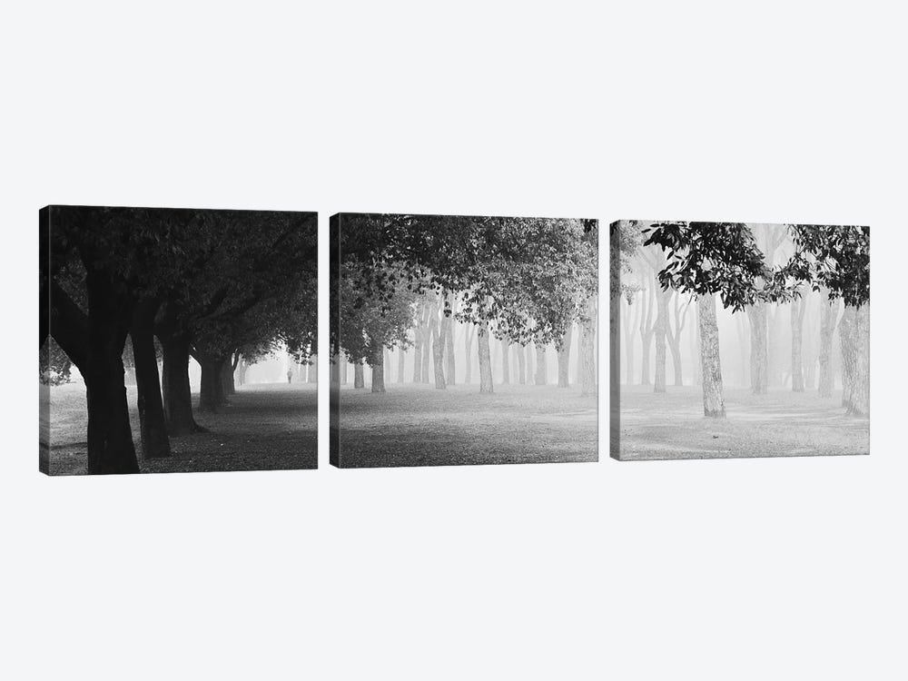 Morning Fog by Matteo Chiarello 3-piece Canvas Art