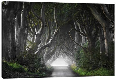 Dark Hedges Canvas Art Print