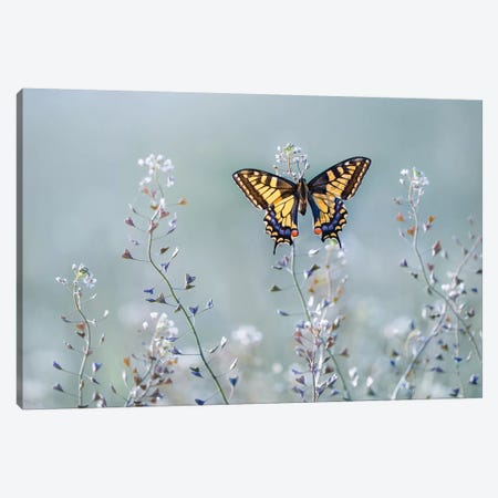 Swallowtail Beauty Canvas Print #OXM4958} by Petar Sabol Canvas Wall Art