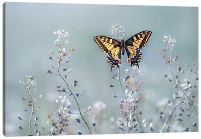 Swallowtail Beauty Canvas Art Print