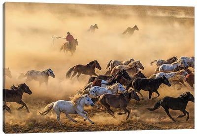 Horse Run Canvas Art Print