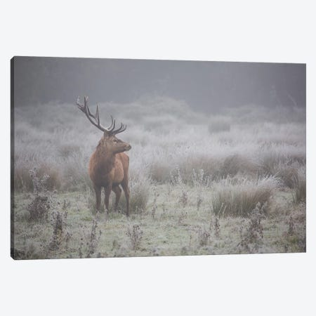 Prideful. Deer . Canvas Print #OXM4969} by Aitor Badiola Art Print