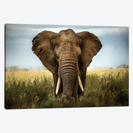 Encounters In Serengeti Canvas Print #OXM496} by Alberto Ghizzi Panizza Canvas Wall Art