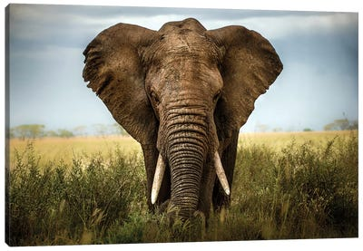 Encounters In Serengeti Canvas Art Print