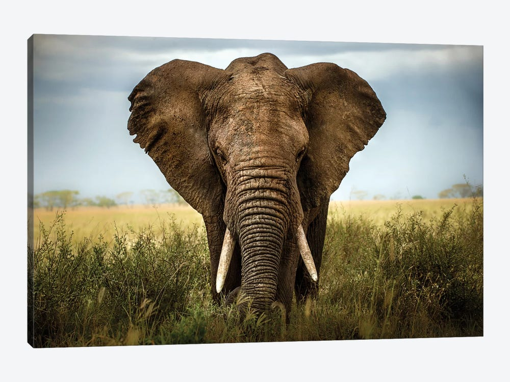 Encounters In Serengeti by Alberto Ghizzi Panizza 1-piece Canvas Art Print