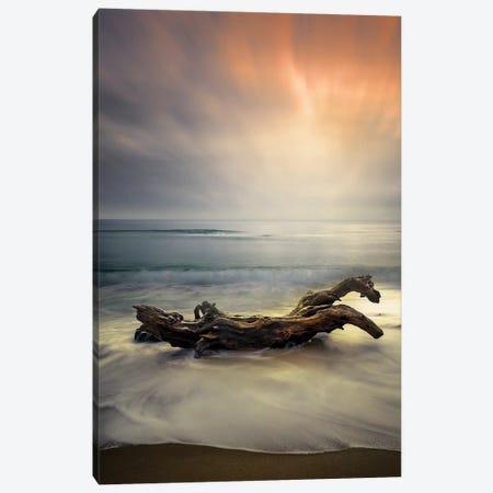 Morning Light Canvas Print #OXM4970} by Albena Markova Canvas Wall Art