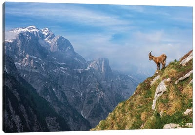 Alpine Ibex In The Mountains Canvas Art Print