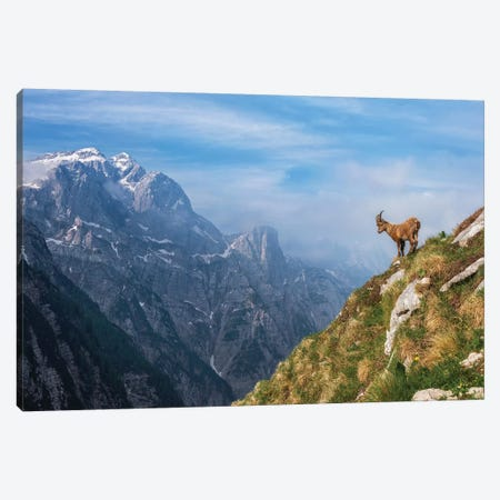 Alpine Ibex In The Mountains Canvas Print #OXM4974} by Ales Krivec Art Print