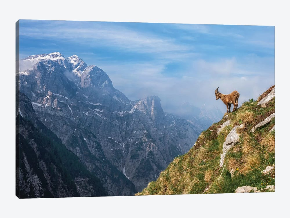 Alpine Ibex In The Mountains by Ales Krivec 1-piece Canvas Artwork
