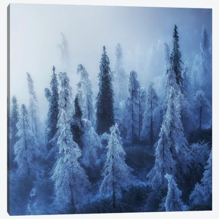 Enchanted Forest Canvas Print #OXM4976} by Ales Krivec Art Print