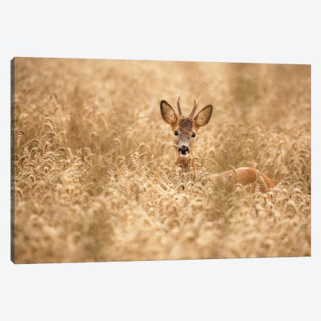 Deer In The Field 3-Piece Canvas #OXM4993} by Allan Wallberg Canvas Artwork