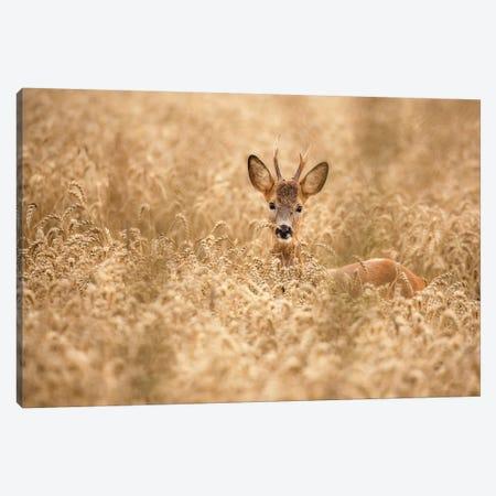 Deer In The Field Canvas Print #OXM4993} by Allan Wallberg Canvas Artwork