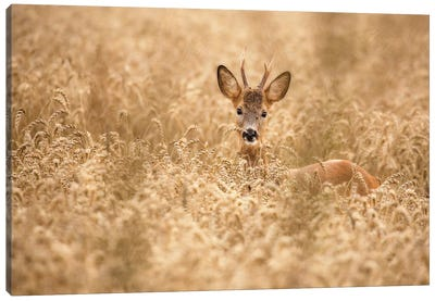 Deer In The Field Canvas Art Print
